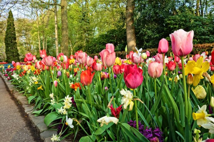 Private keukenhof gardens tour Amsterdam