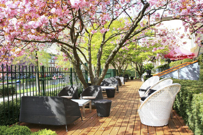 Serre Restaurant Terrace Cherry Blossom