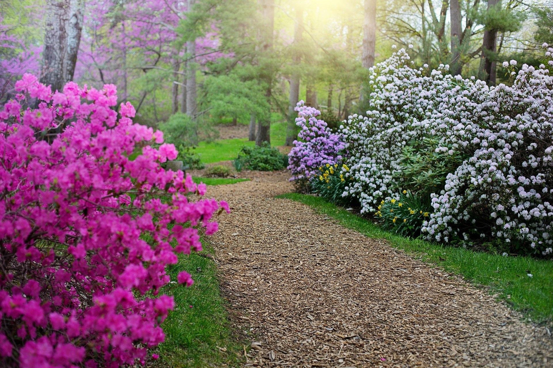 Botanical-gardens-netherlands-2